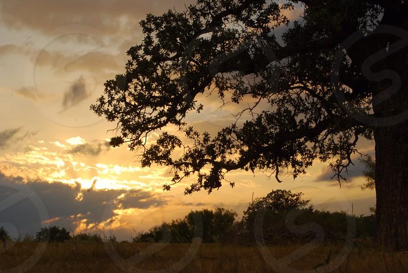 Alvord Texas photo