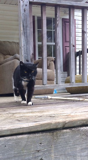 My cat loves being outside. It unlocks her inner prowess.  photo