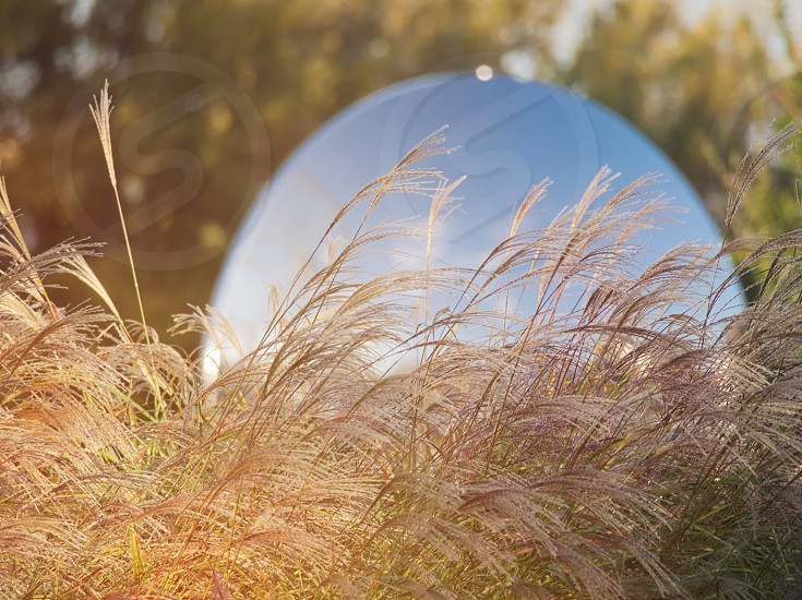 Long Grass on Dunakapu Square on a Sunny Autumn Day in Győr Hungary photo
