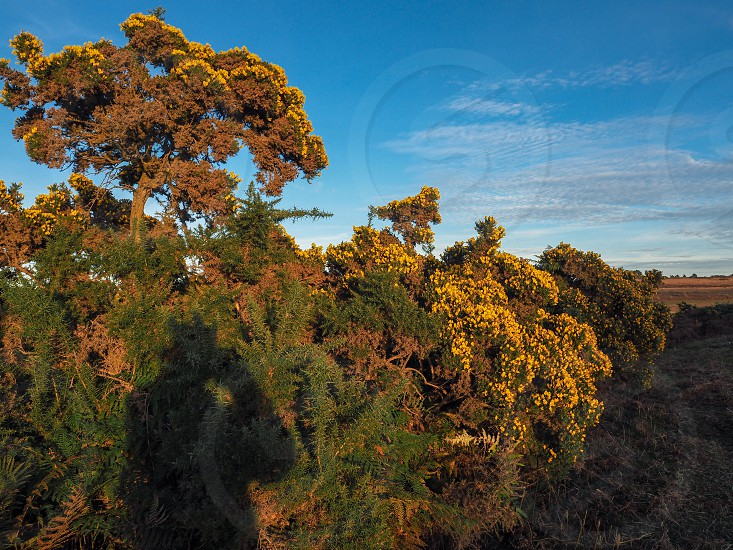 Shadow of Photograher at Work in the Ashdown Forest photo