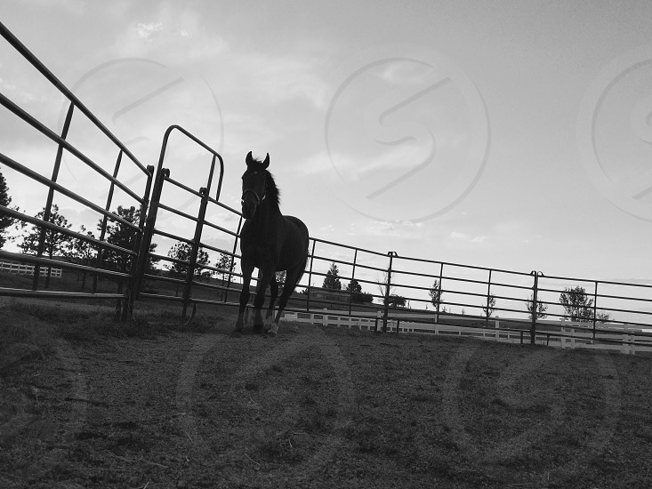 grayscale shot of a horse in cage photo