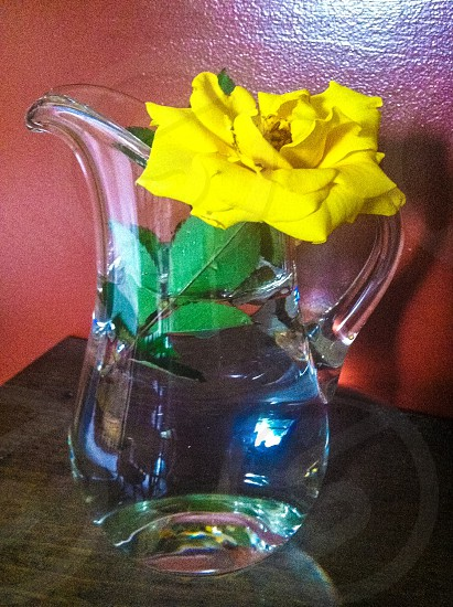 yellow flower on glass pitcher on brown wooden table photo