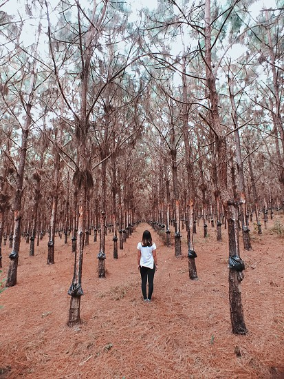 woman standing in the middle of forest near trees with black plastic bags photo