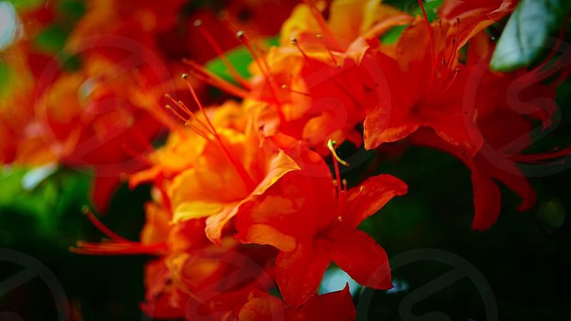 closeup photography of orange petaled flowers photo
