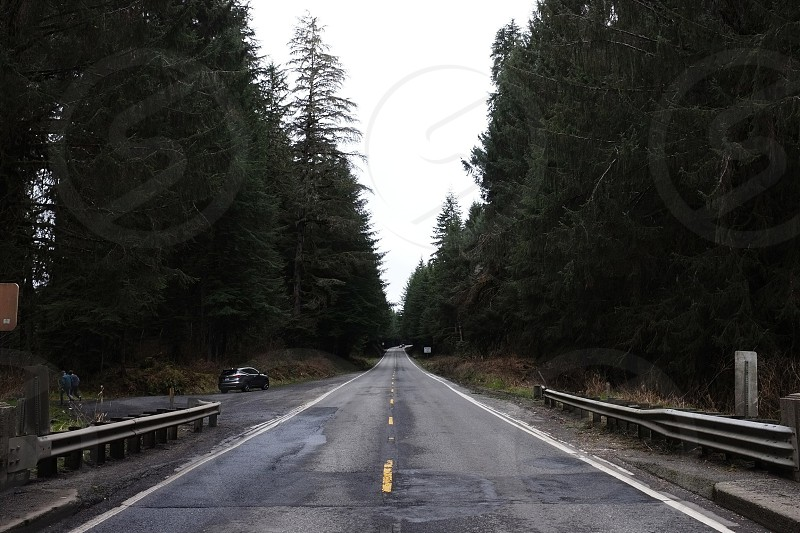 asphalt road surrounded by trees photo