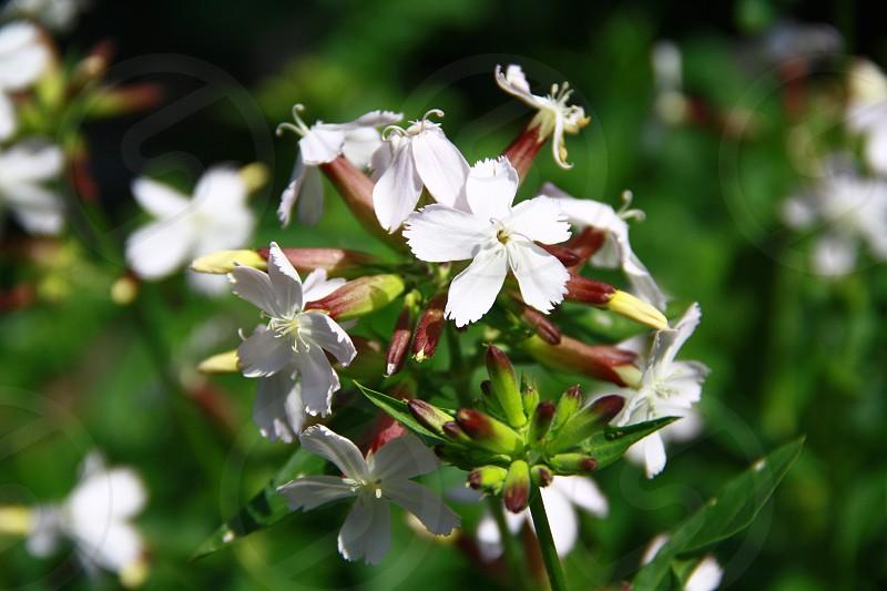 Цветы photo