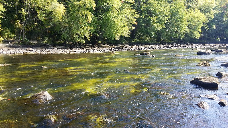 Green Slimy Plant growing on the river bed of the Merrimack River in Litchfield NH photo