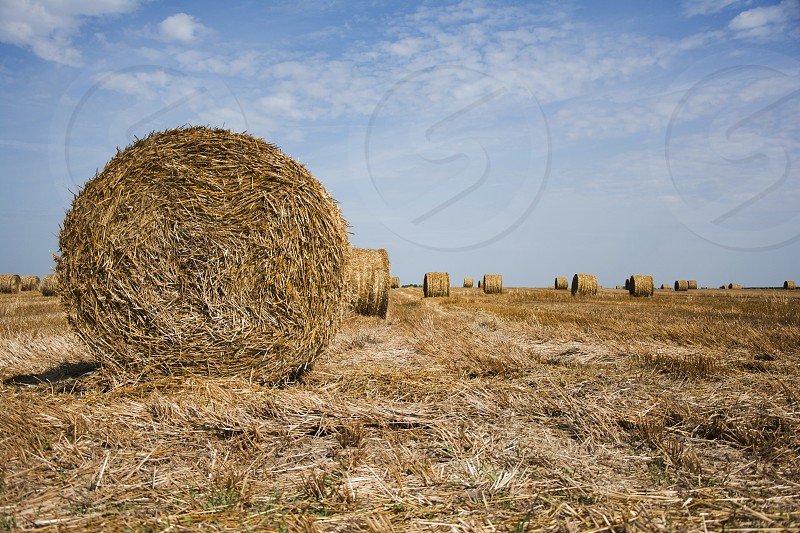 Bales of hay in the field photo
