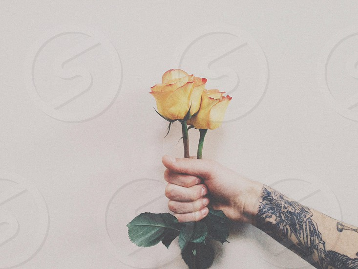 view of a person holding yellow flower photo