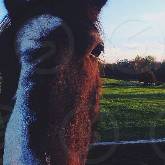 brown horse on green grass photo
