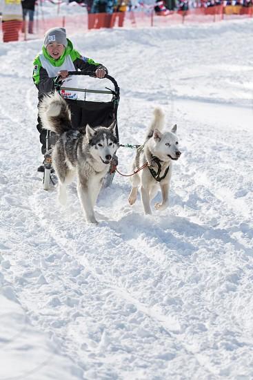 PETROPAVLOVSK-KAMCHATSKY KAMCHATKA RUSSIA - MARCH 2 2014: Kamchatka Kids Dog Sledge Race Dulin Beringia. Young boy musher with his sled dog runs at a distance of 3 kilometers. photo