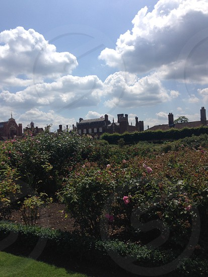 Rose garden photo