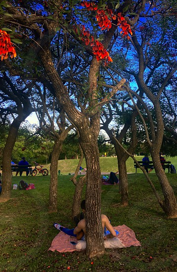 Buenos Aires Argentina Ceibo National Flower petals flowers red trees under the shadow resting laying down grass ecological reserve hugging love romantic bench bicycle people park photo