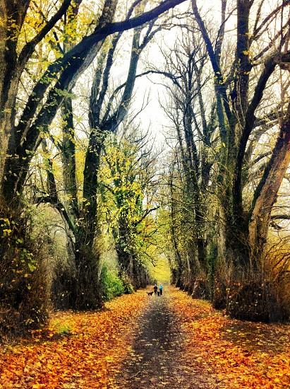 Autumn walk! photo