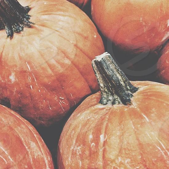 orange pumpkins photo