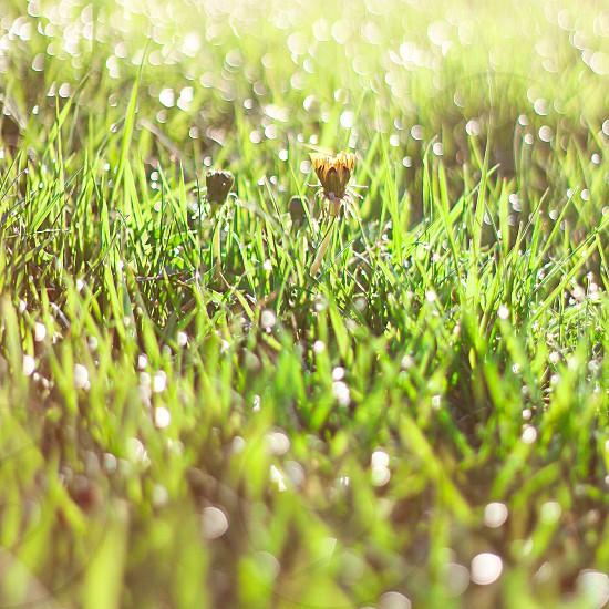 grass flower mist photo