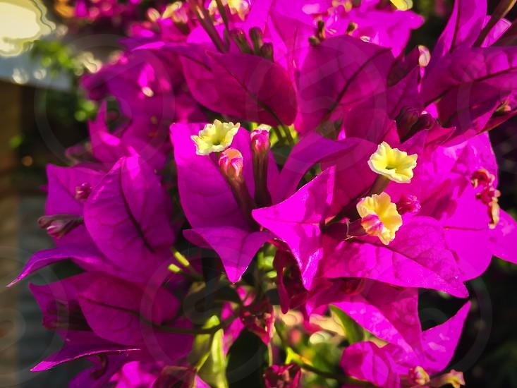 Plantas verano  photo