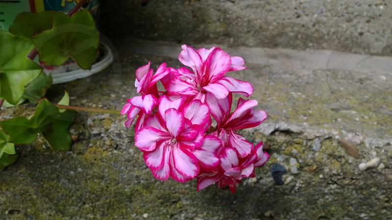in my garden photo