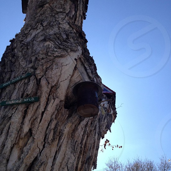 black tin can on tree trunk photo