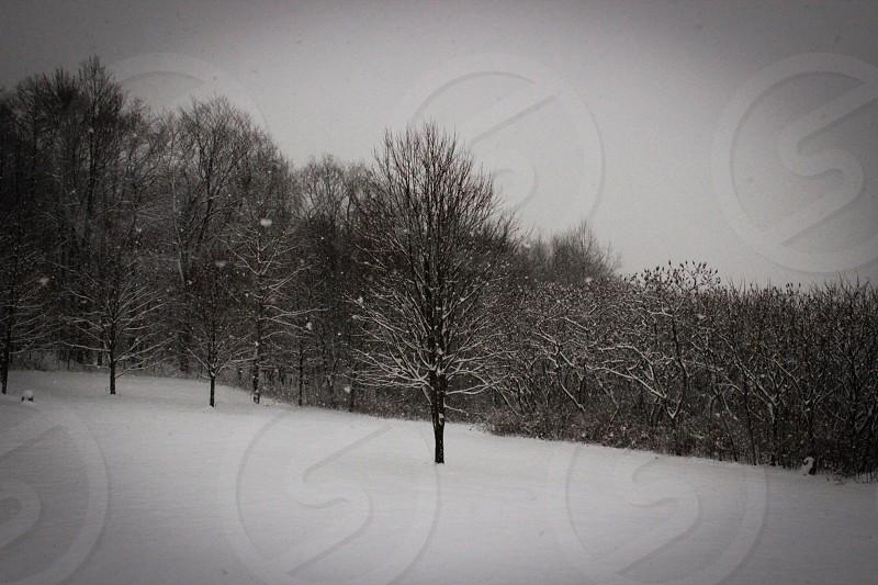 white snow on ground near brown leafless trees photo