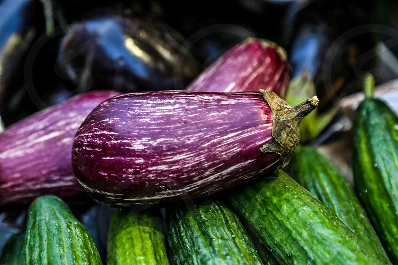 Aubergines  food harvest cucumbers photo
