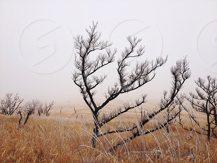 bare frosted deciduous trees in brown grass field beneath white sky photo