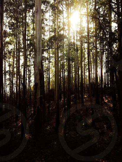 #Landscapephotography #photooftheday #forest #bestoftheday #bestshots photo