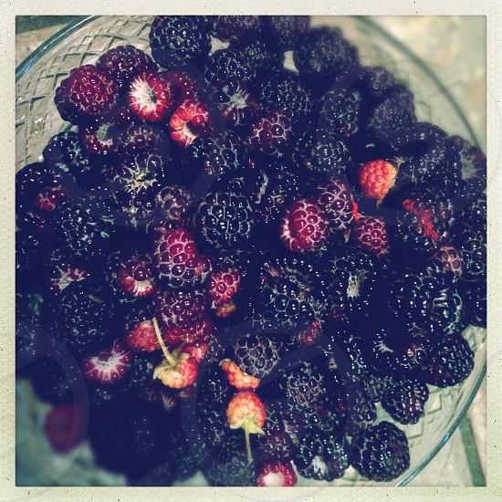 raspberries on clear cut-glass bowl photo