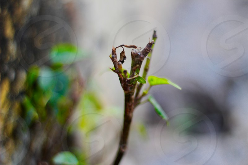 Nature is every thing for us By canon 5d with 50mm lens  photo