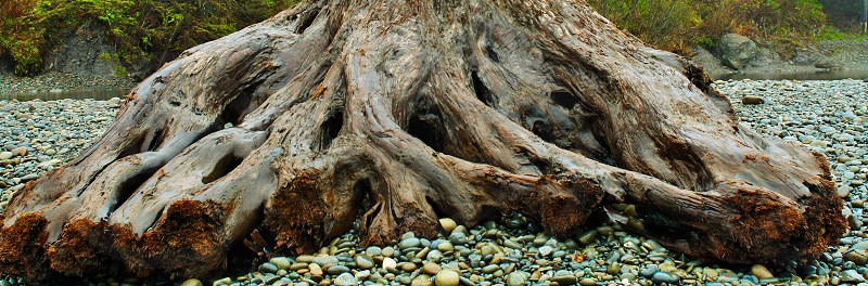 brown wooden roots atop gray gravel photo