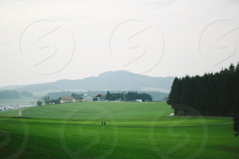 Green space and trees in Austria photo