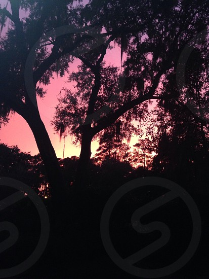Sunset through Liveoaks photo