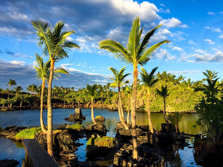 Hawaii sunshine palm tree lagoon morning photo