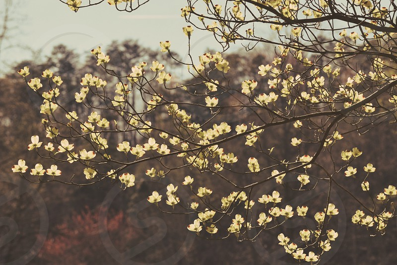 Bloomsflowersphotographynewaccount  photo