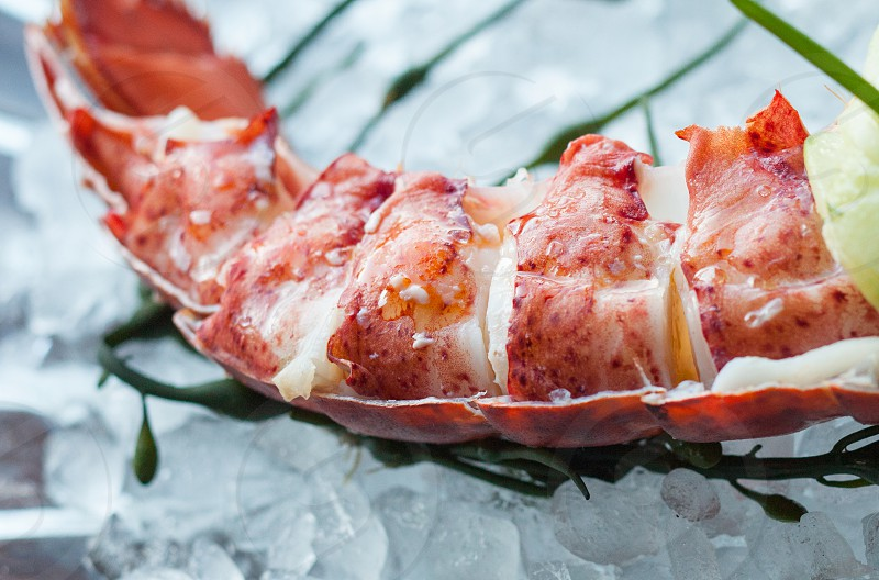 steamed lobster on green leaf plant closeup shot photography photo