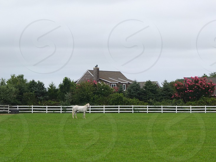 white horse on grass field beside white wooden fence photo