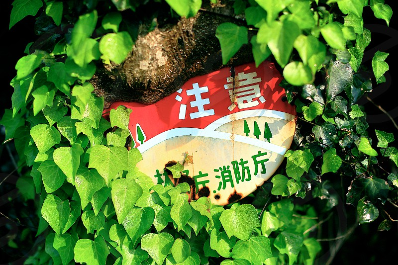 mean and green green leaves tree ivy sign board natural day light outdoor close-up horizontally long laterally long oblong DSLR camera photo