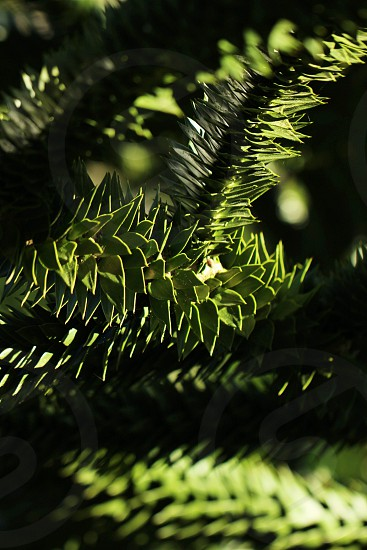 green spiky plant photo