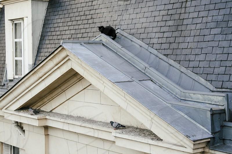 Black cat on roof in Paris stalking pigeons photo