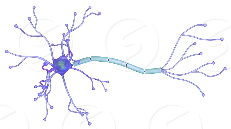 3D illustration of a neuron photo