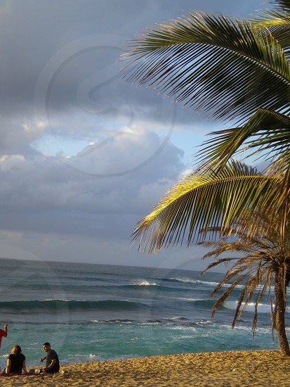 Calm before the storm.  North Shore Hawaii.  Oahu Palm Tree Ocean Clouds Tranquility photo