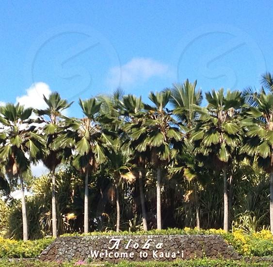 What could be greener than Kauai! photo