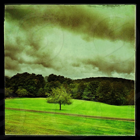 Portrait of a tree under clouds and grey  photo