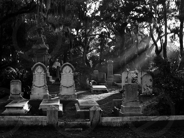 Bonaventure Cemetery in the early morning photo
