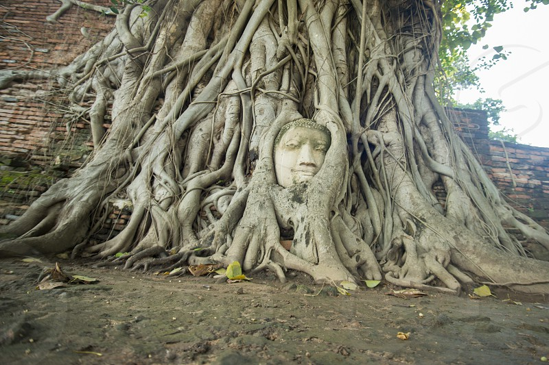 the stone head at the Wat Phra Mahathat in the city of Ayutthaya north of bangkok in Thailand in southeastasia. photo