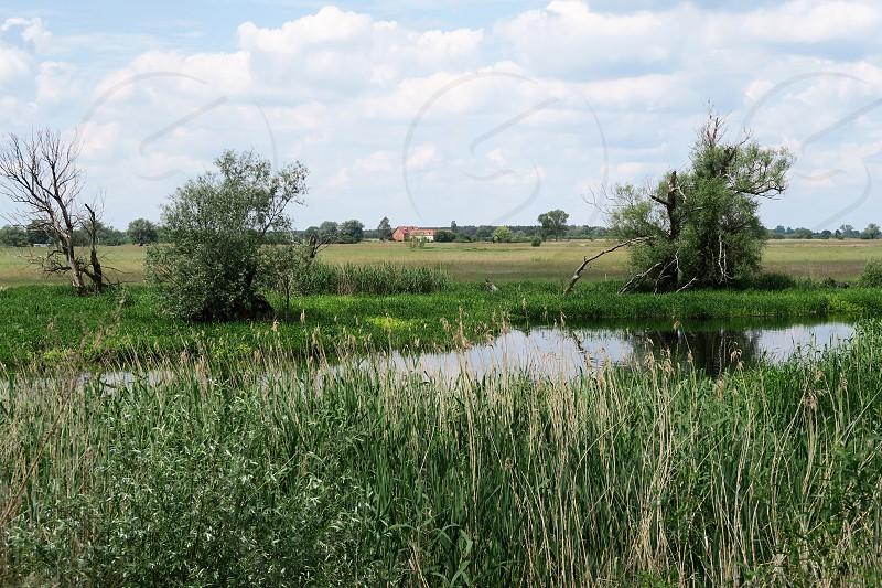 Havel river in summer flowing through Havelland (Brandenburg Germany). meadows around. photo