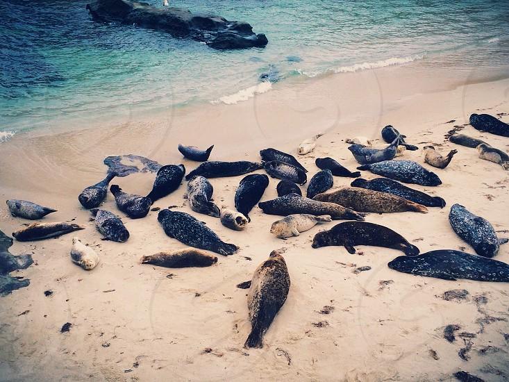 Seals ashore photo