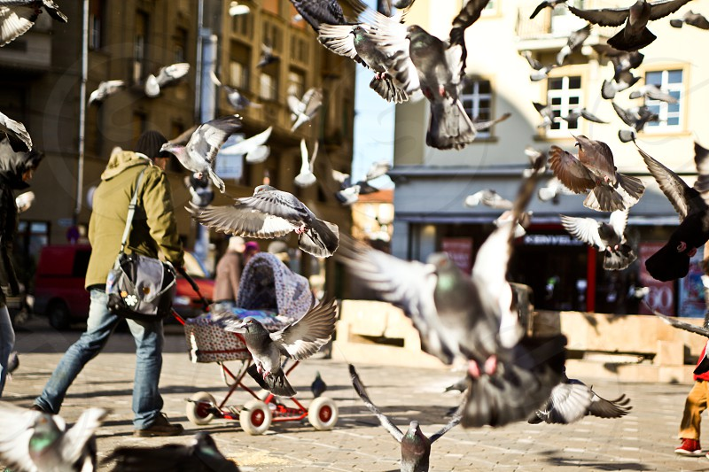 person walking with baby stroller while pigeons are flying photo