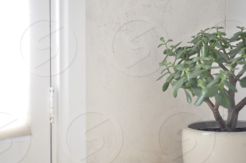 Succulent in white pot in a white minimal room saturated with natural light. photo