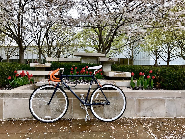 Bicycle cycling cherry blossoms cherry tree park outdoors   photo